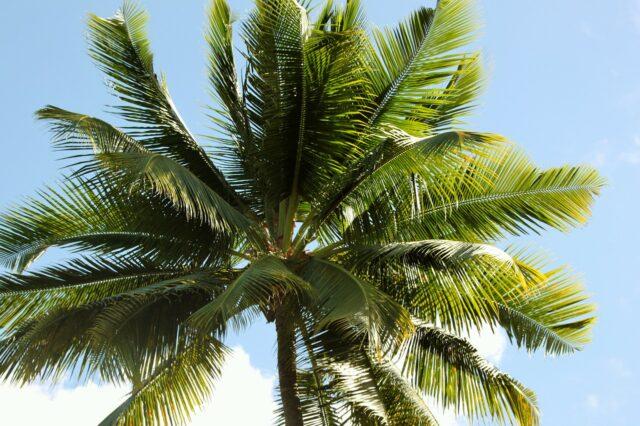 Palmsöndag